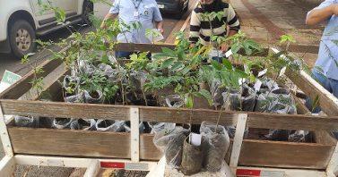Em parceria a Águas Guariroba, CREA-MS distribui mudas nativas na Semana do Meio do Ambiente
