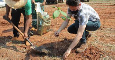 Dia da Árvore: Águas Guariroba doa 500 mudas para recuperação de áreas incendiadas no Parque dos Poderes